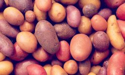 Potato Trivia – 10 Facts about the Mighty Spud