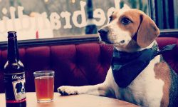 You can now share a pint with your Dog
