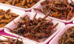 Eating Insects – The New Protein Fuelled Health Kick
