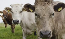 Eating less Meat is one of the best things you can do to help the Planet